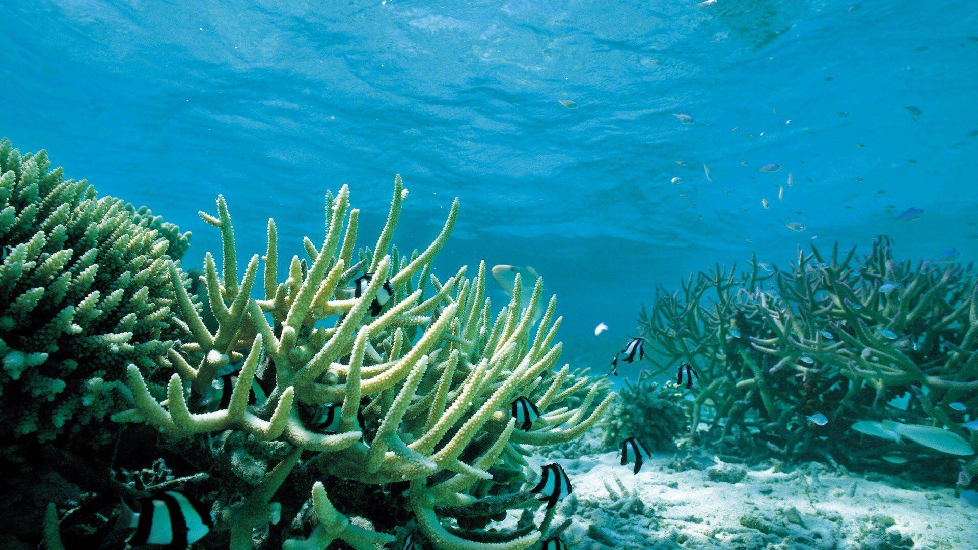 Under Sea Wallpapers