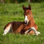 Baby Horses Wallpapers Wallpaper Cave