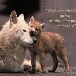 Wolf Puppies Wallpapers Wallpaper Cave