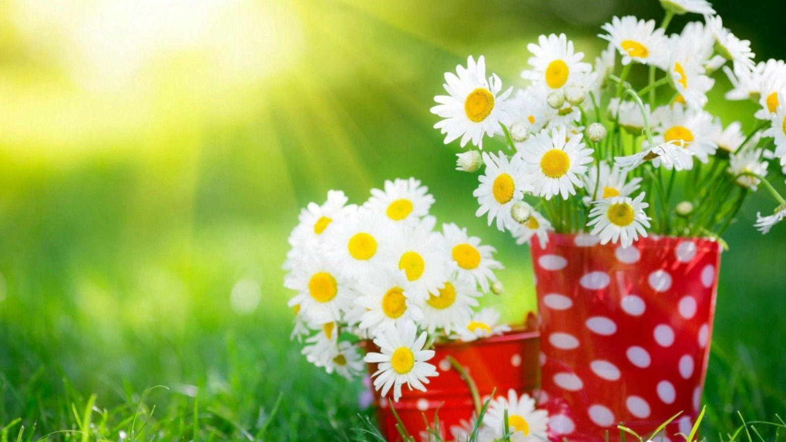 Most Beautiful Flowers Wallpapers For Desktop Wallpaper Cave