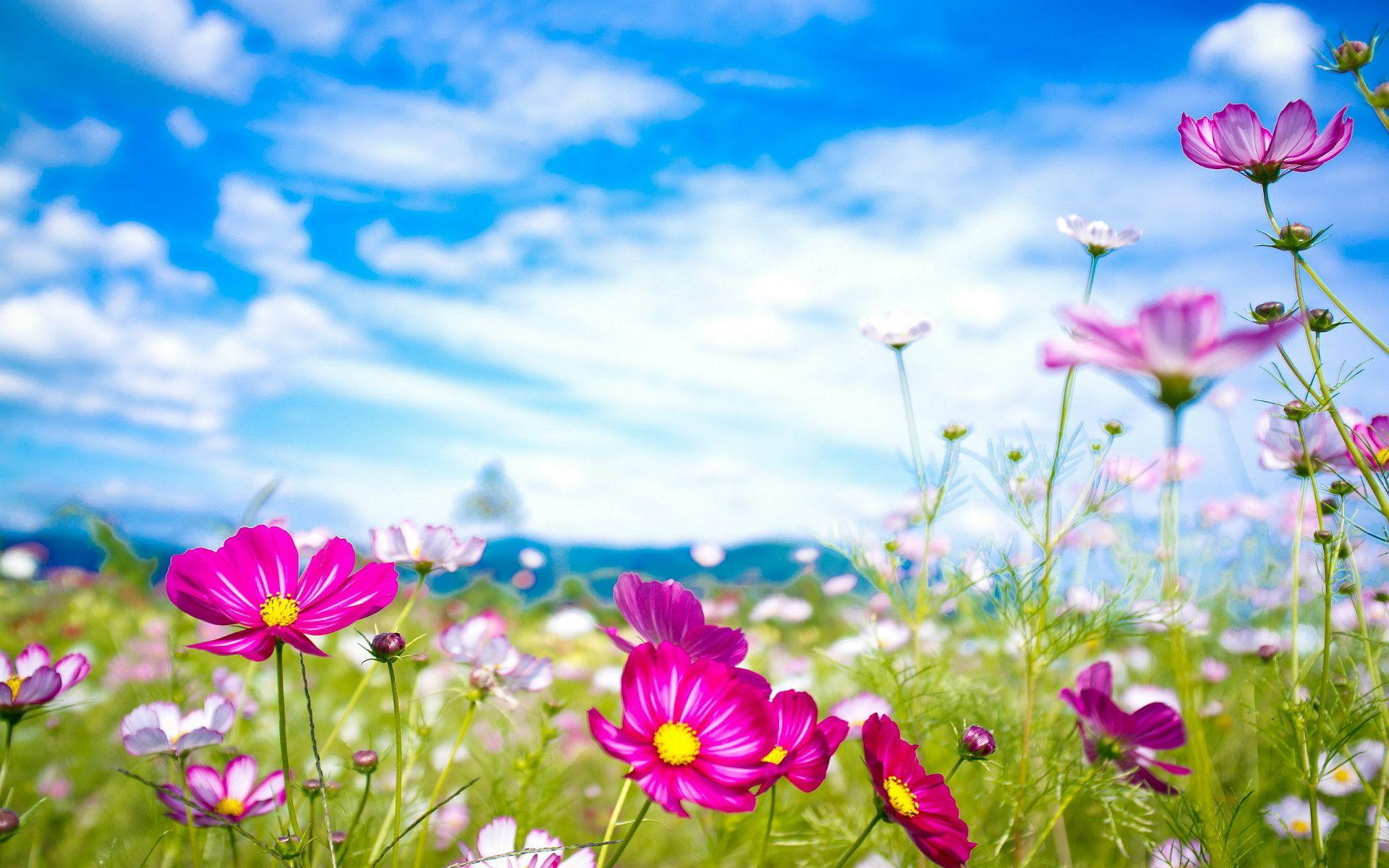 Most Beautiful Flowers Wallpapers For Desktop Wallpaper Cave