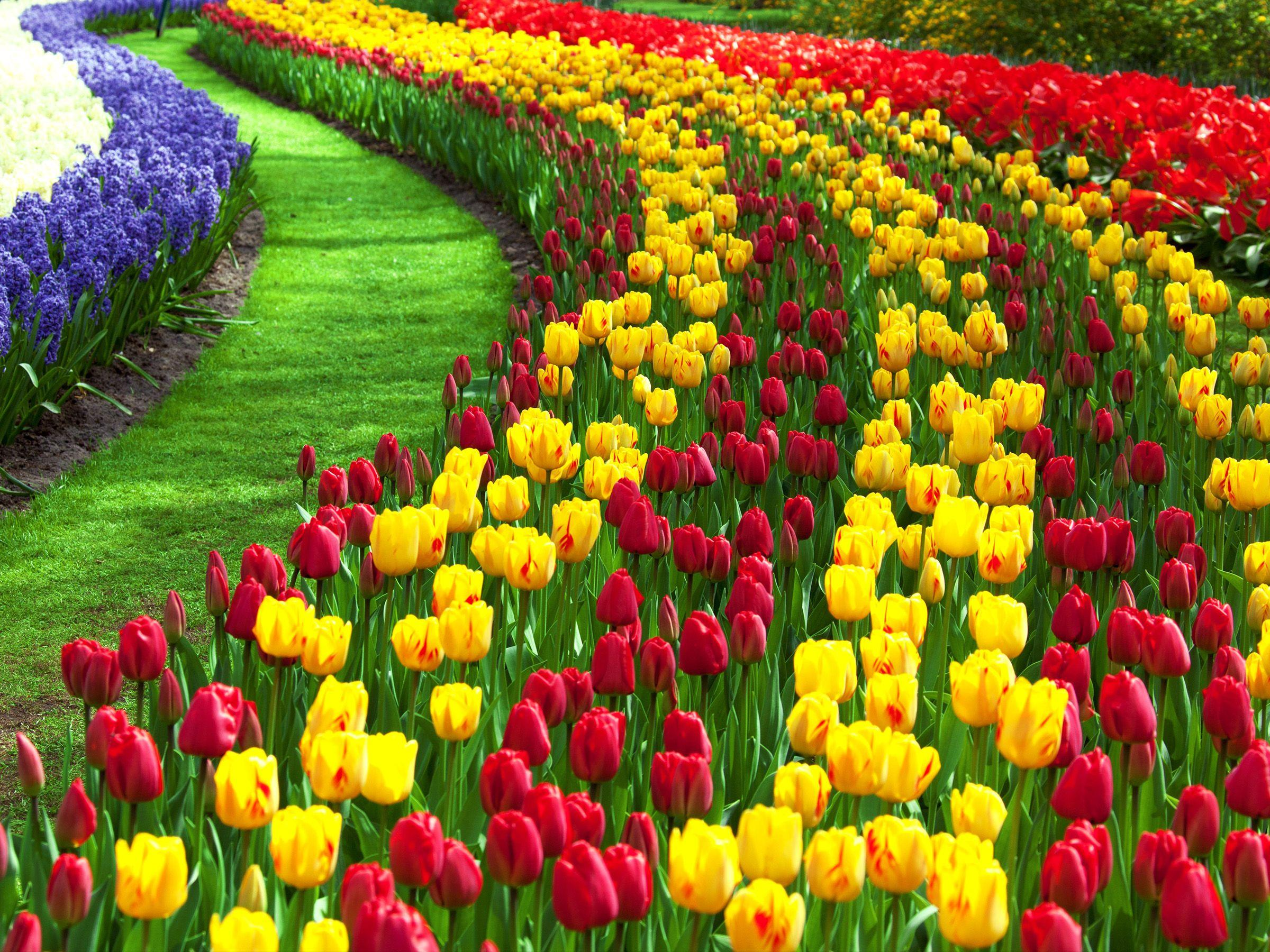 Full Screen Flower Garden Nature Wallpaper Hd 3d