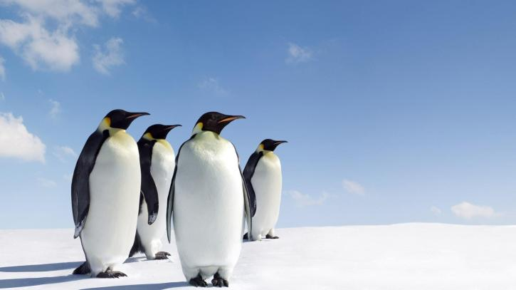 Penguins Wallpapers - Wallpaper Cave