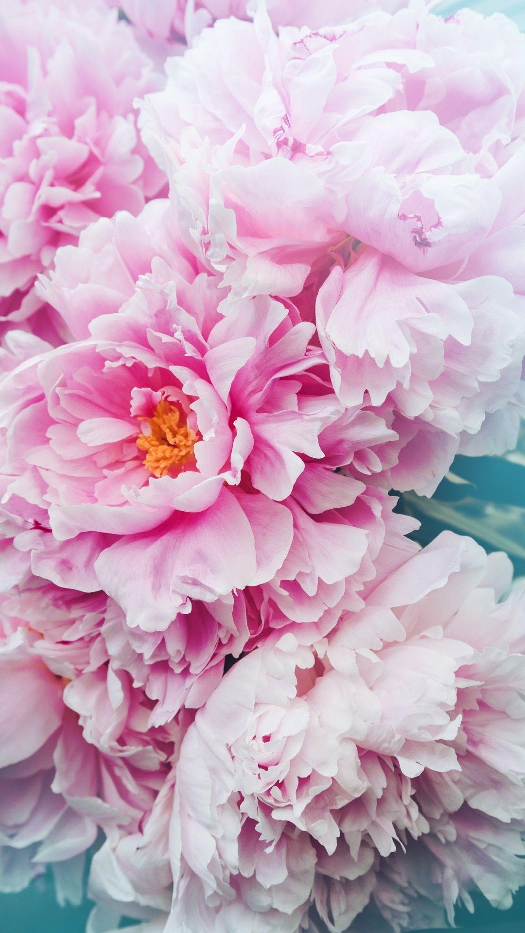 Summer Peonies Wallpapers Wallpaper Cave