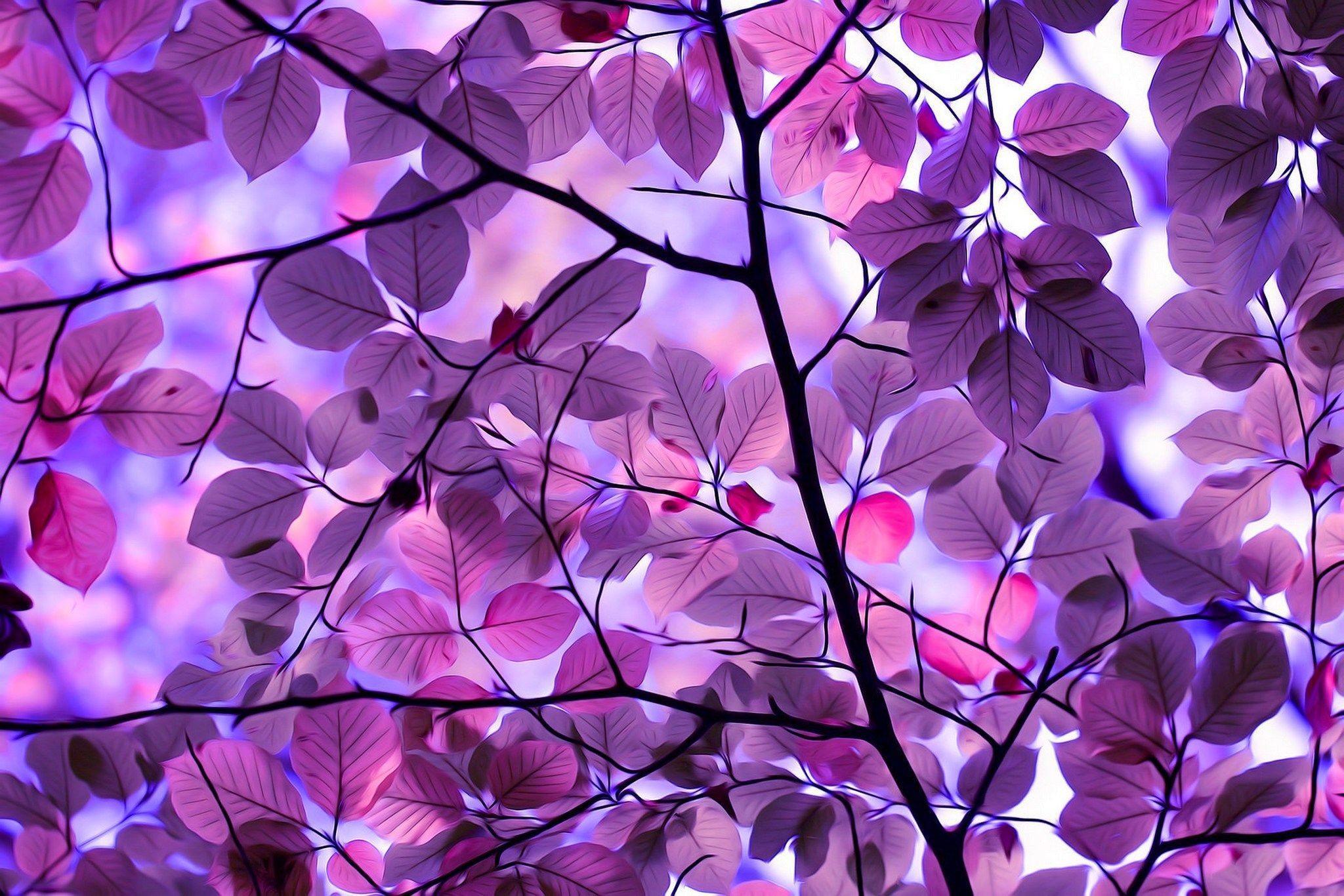 Beautiful Purple Wallpaper Nature Novocom Top