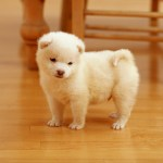 The Smallest Puppies Wallpapers Wallpaper Cave