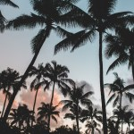 Aesthetic Palm Trees Wallpapers Wallpaper Cave