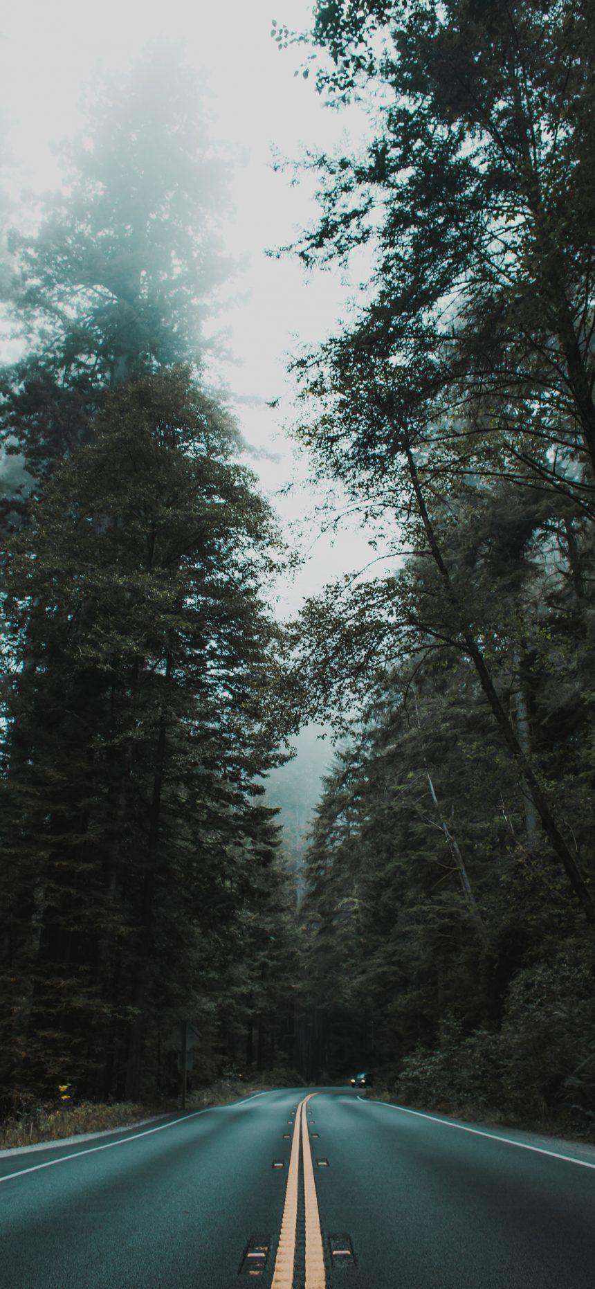 iphone 11 hd 4k forest wallpapers