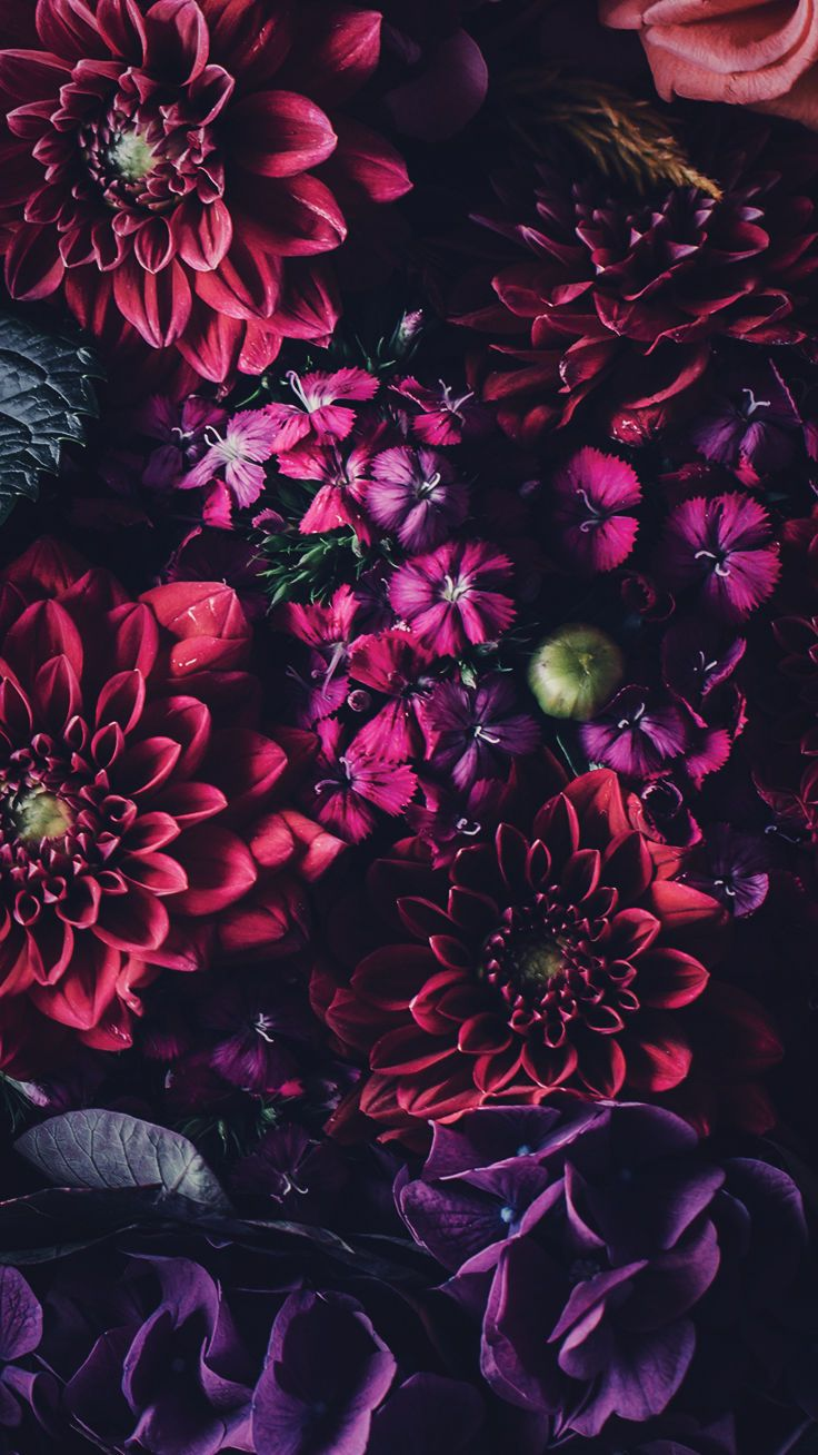 Flowers Iphone Wallpapers Wallpaper Cave