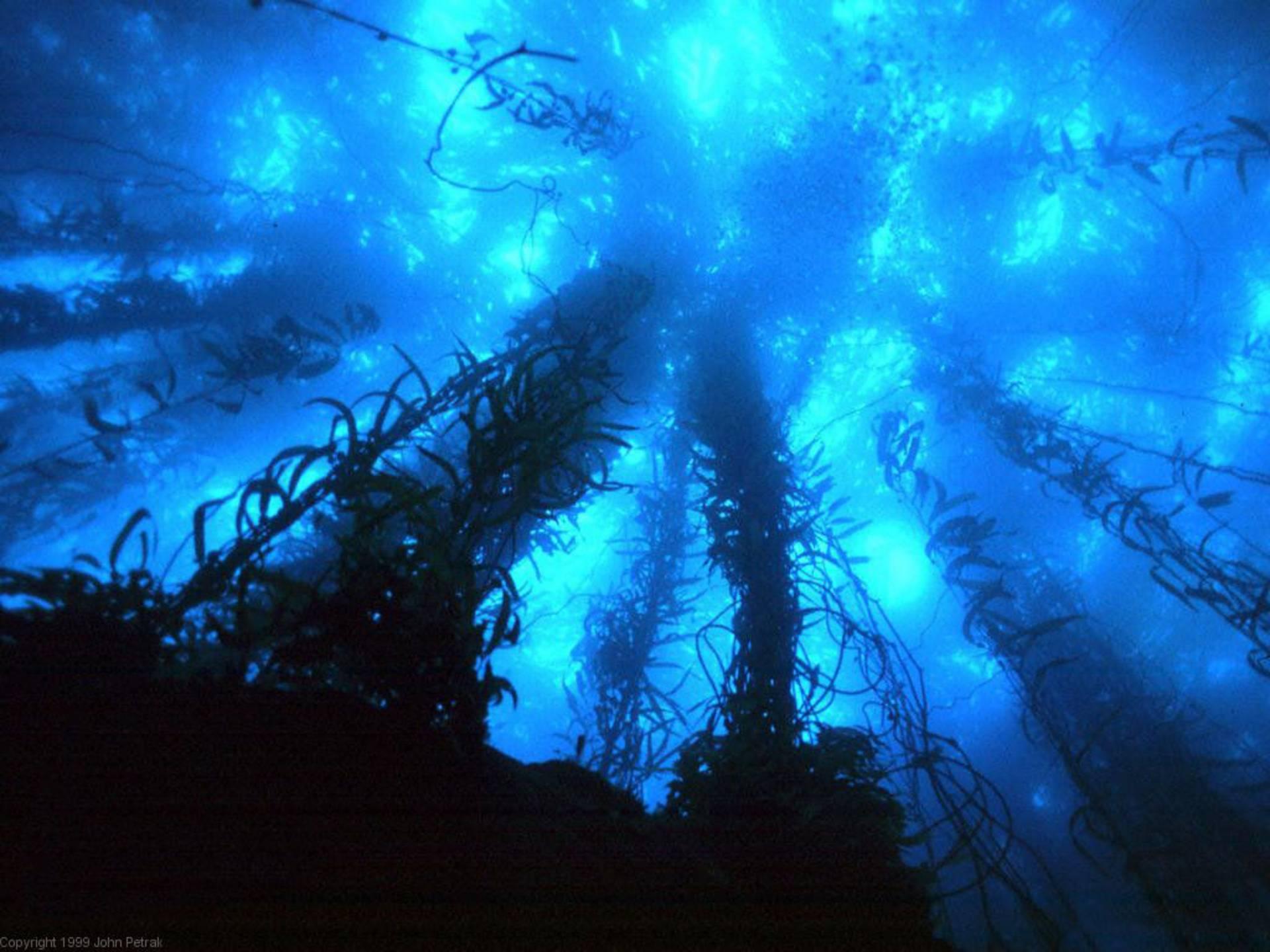 Deep Sea Wallpapers Wallpaper Cave