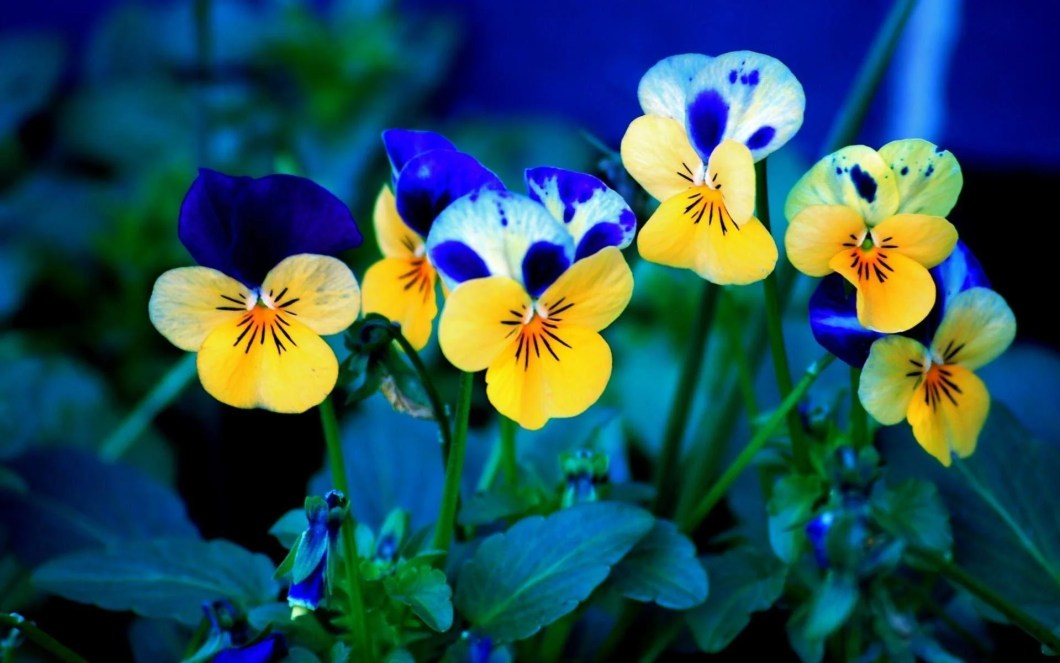 Free spring flowers wallpaper desktop imagewallpapers free spring flowers wallpapers wallpaper cave mightylinksfo