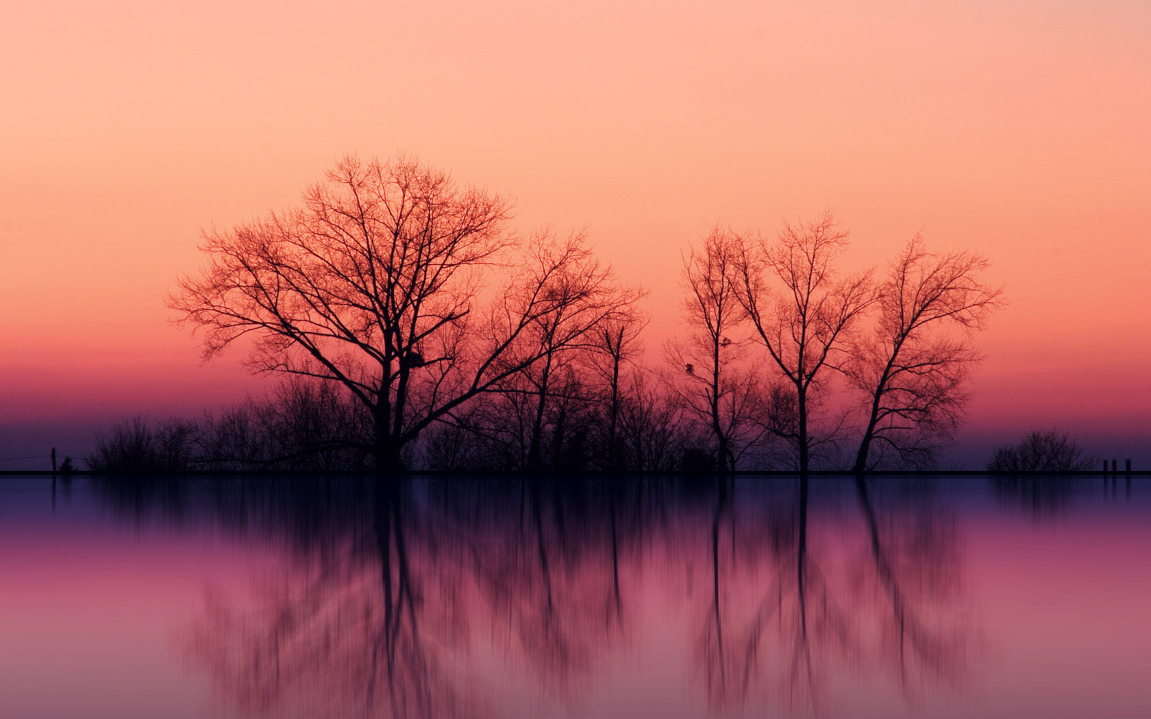nature pink background