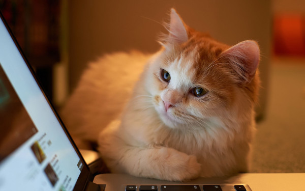 Gatito Curioso Wallpapers Wallpapers
