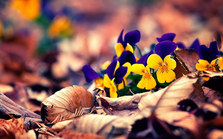 Resultado de imagen de naturaleza y flores de otoño