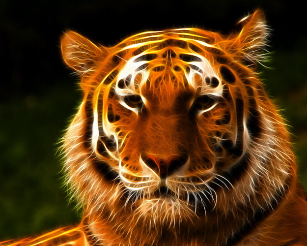 Download Wallpaper With Animals Tiger With Tags Windows 10 Fractal Tiger