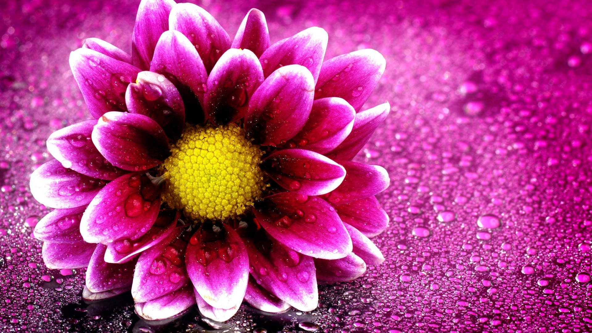Beauty Flower Wallpaper Hd 2020 Cute Wallpapers