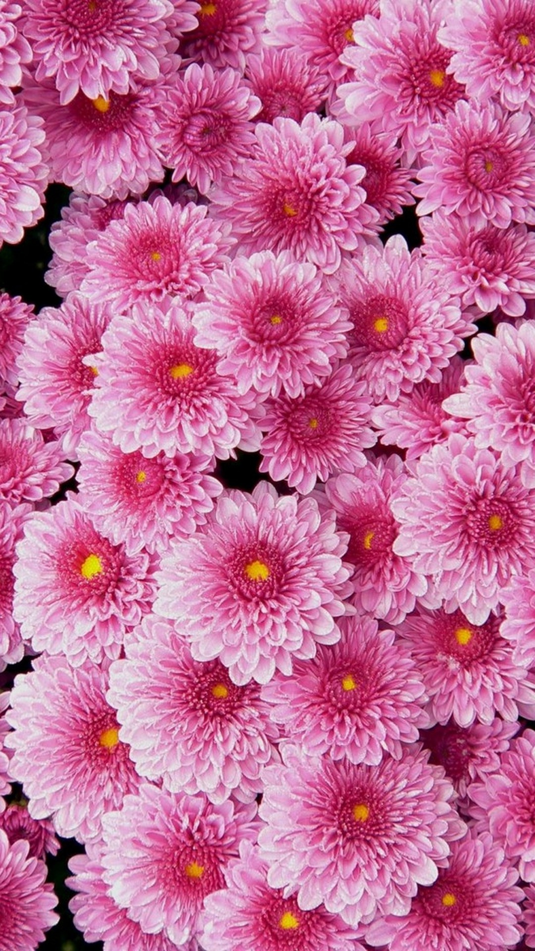 Pink Flower Wallpaper For Phone 2020 Cute Wallpapers