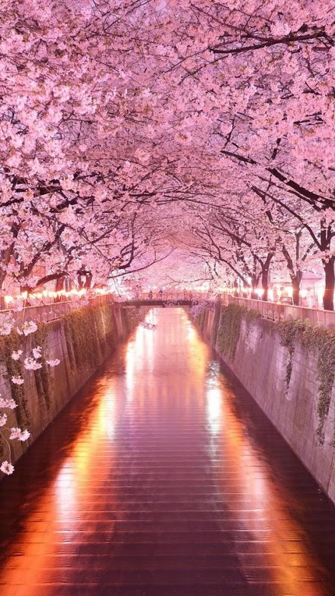 Pink Flower Iphone Wallpaper Hd 2020 Cute Wallpapers