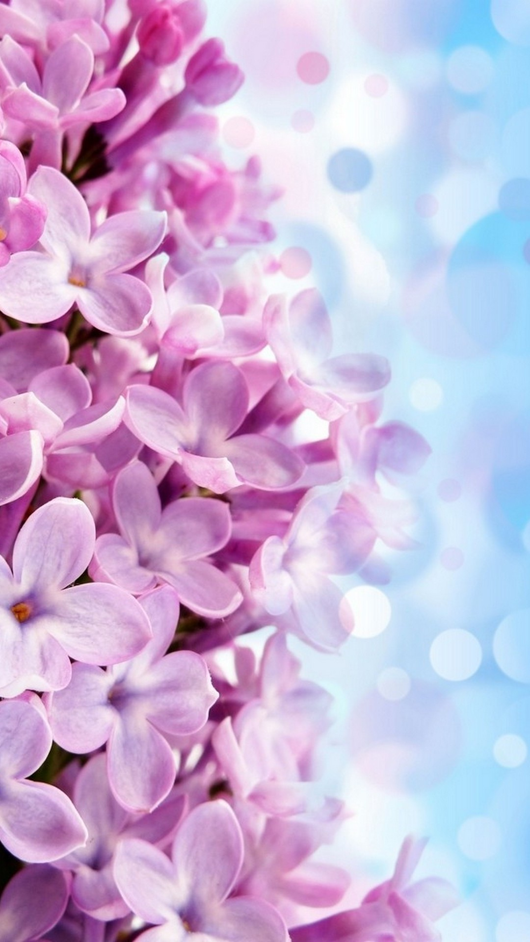 Iphone Wallpaper Hd Purple Flowers 2020 Cute Wallpapers