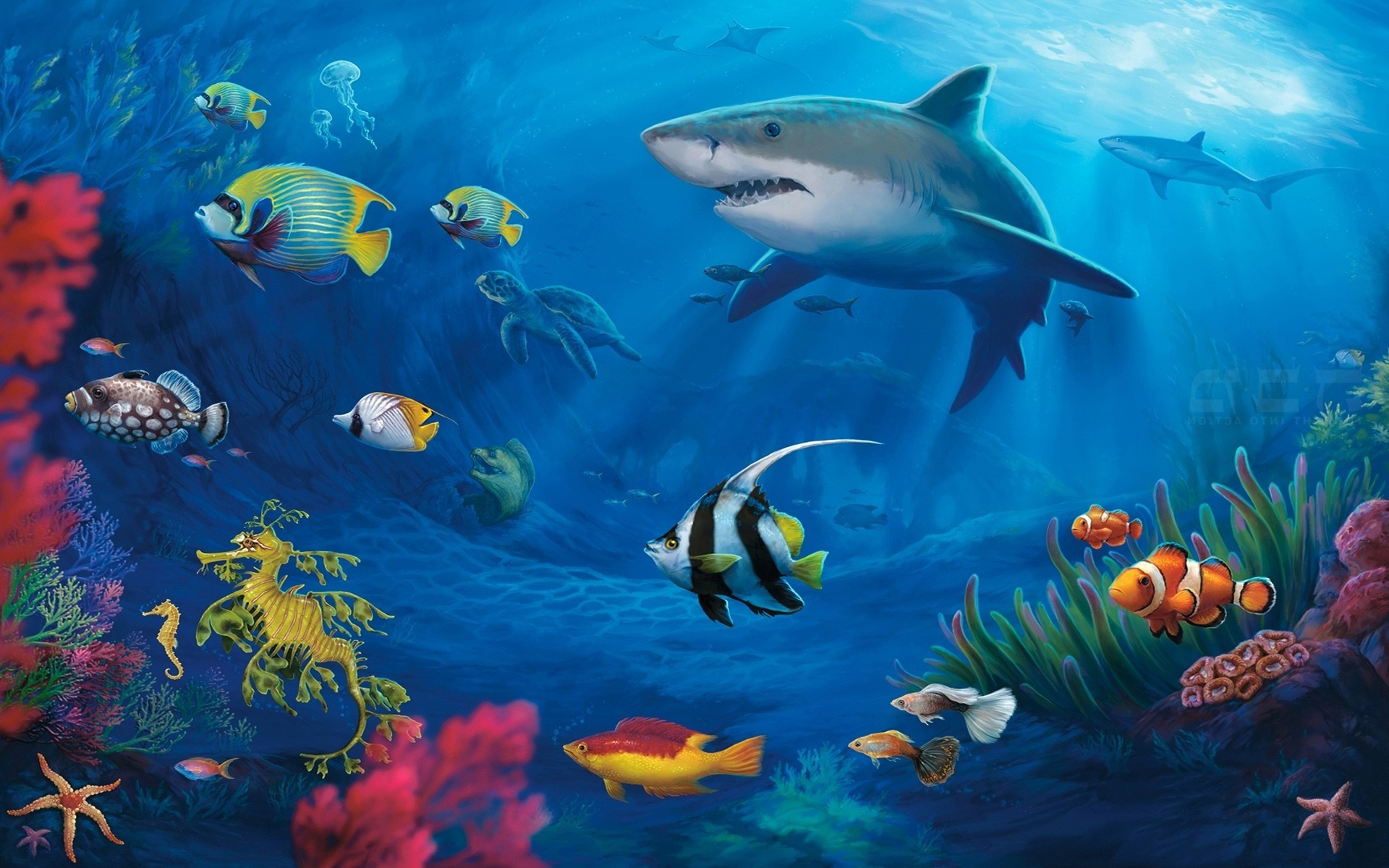 Tropical Fish Backgrounds 63 Pictures