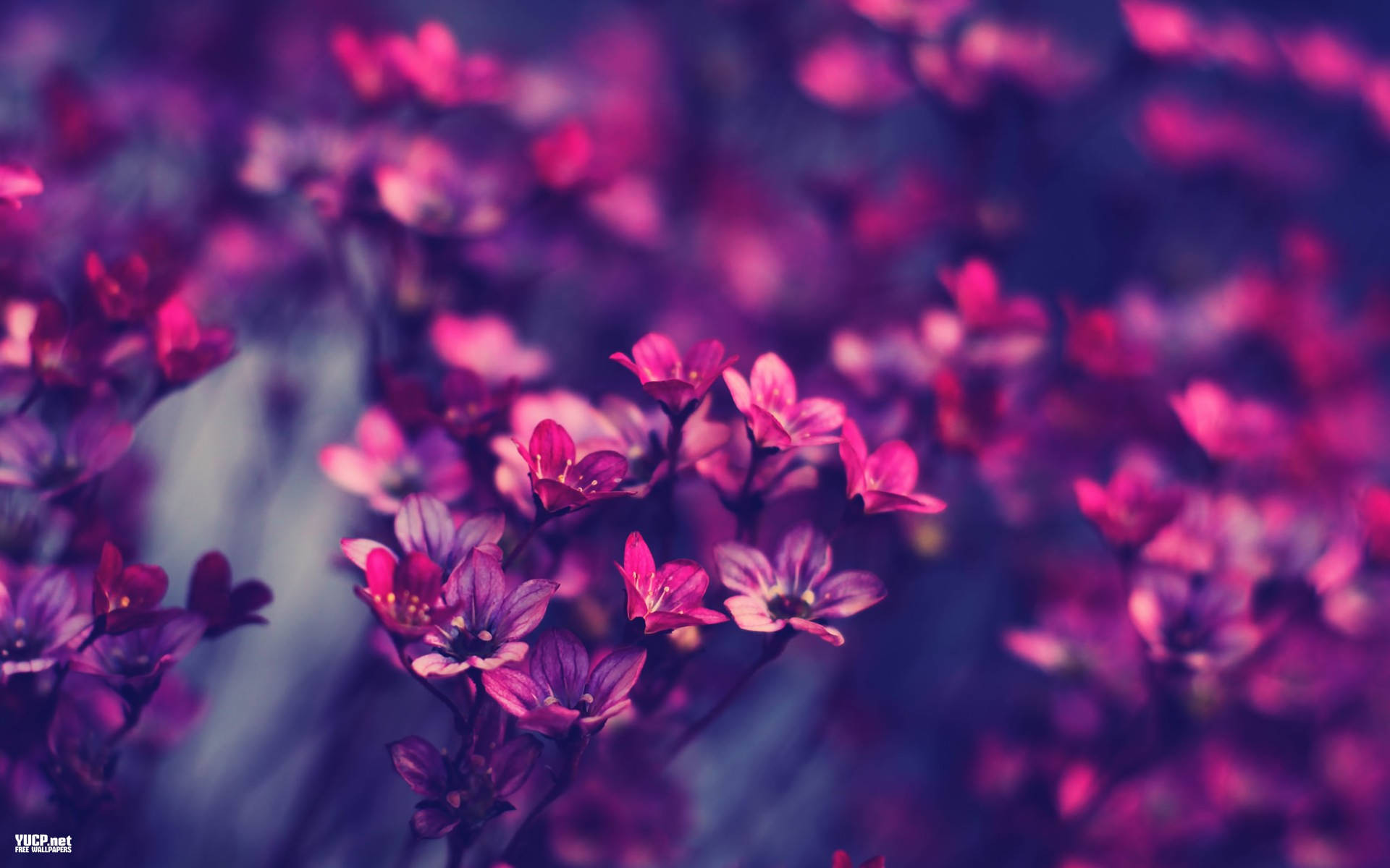 Vintage Flowers Wallpaper 68 Pictures