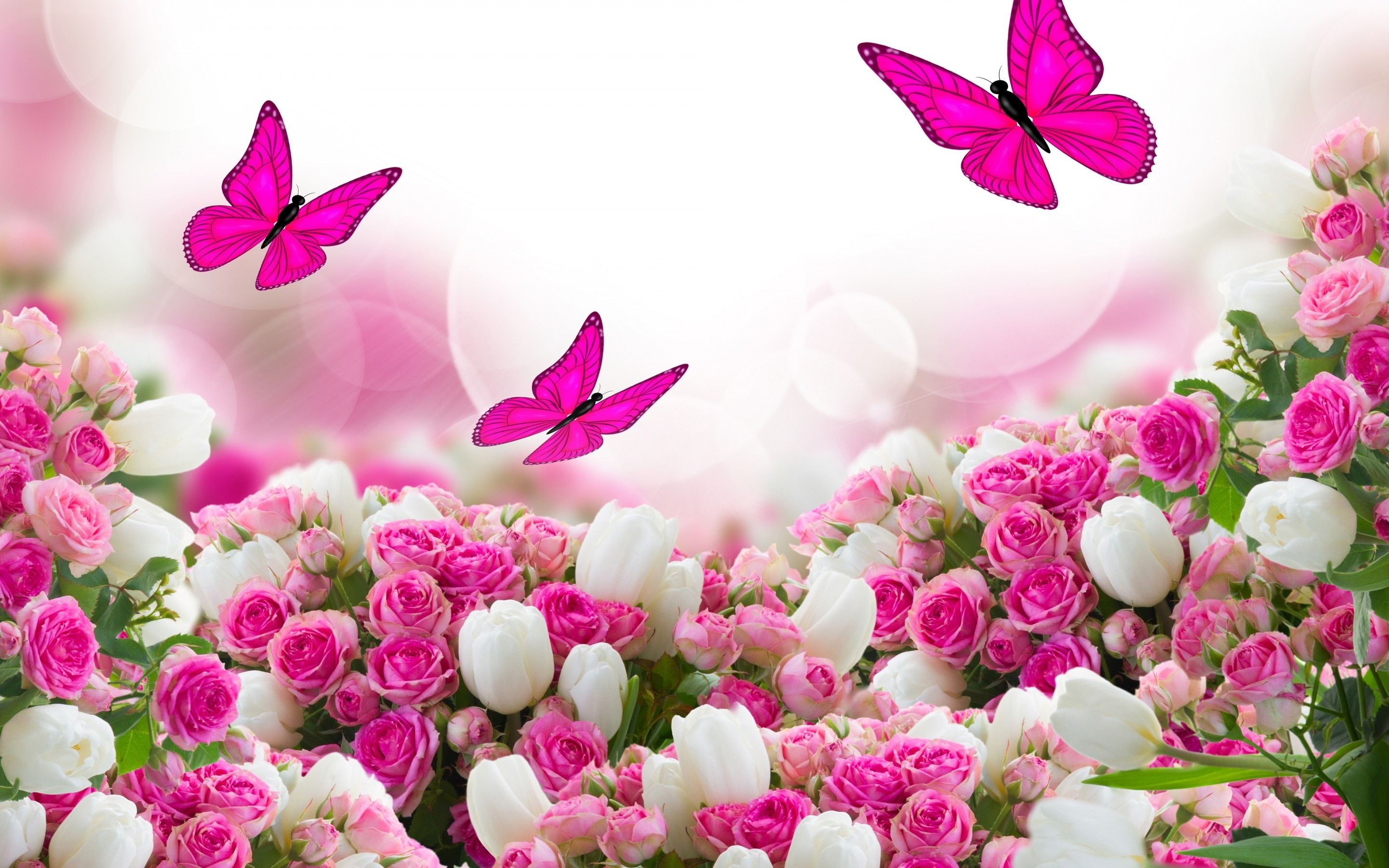 Pink Rose Flower Wallpaper 62 Pictures
