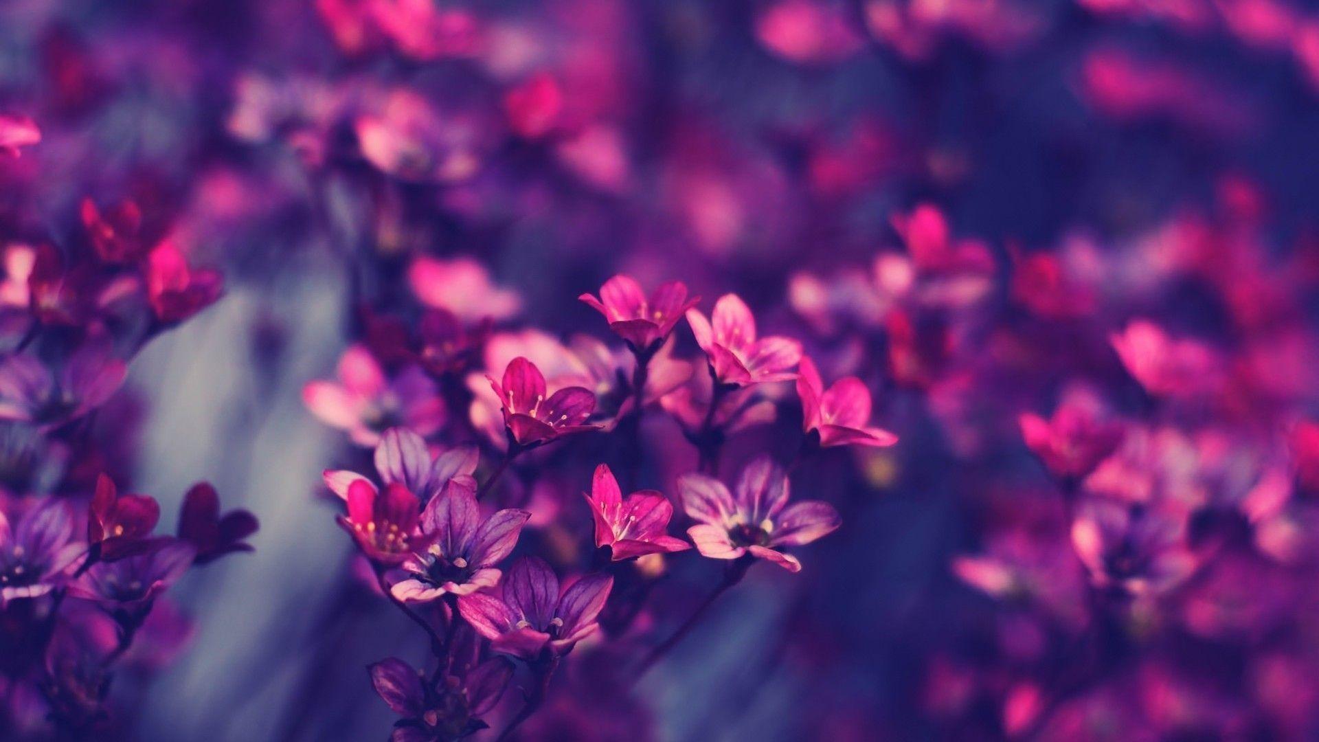 Desktop Background Flowers 67 Pictures