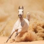 Arabian Wallpaper 63 Pictures