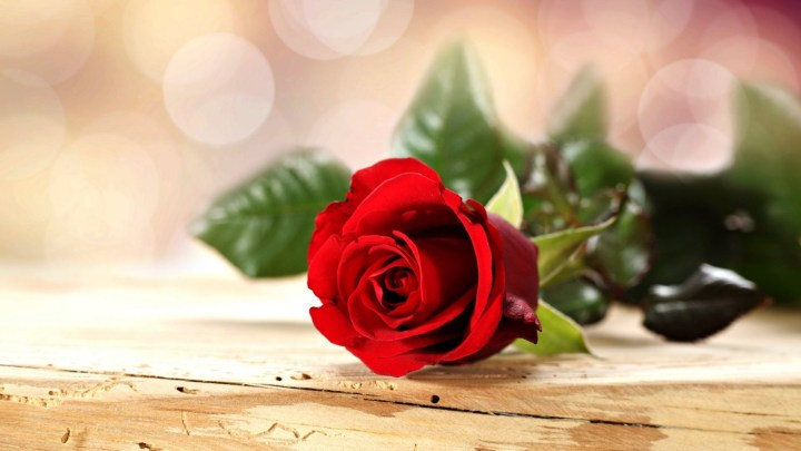 Red Rose Pictures With Love Quotes In Hindi Wallpapergood Co