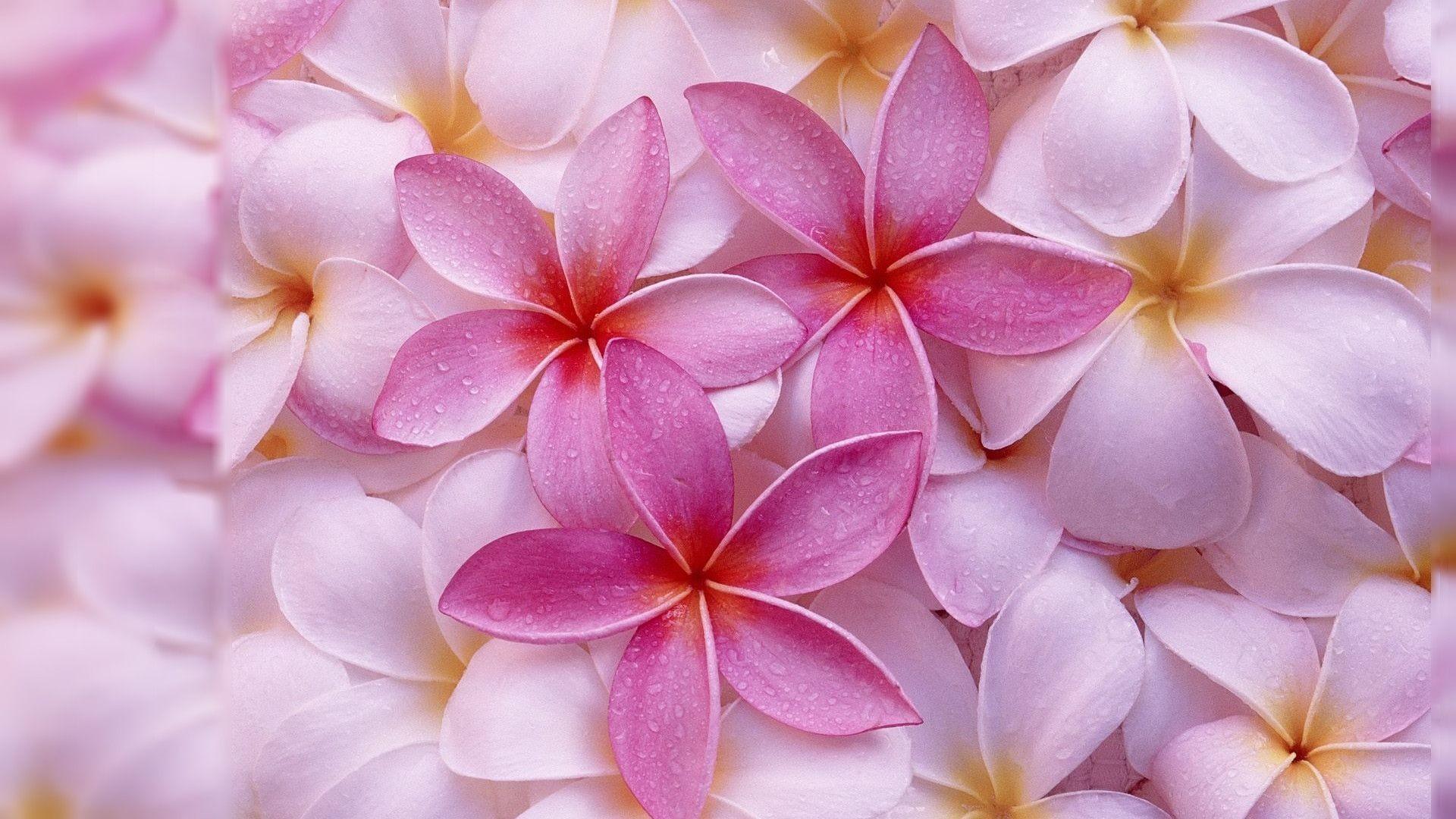 Flower Desktop Background Pictures 64 Pictures