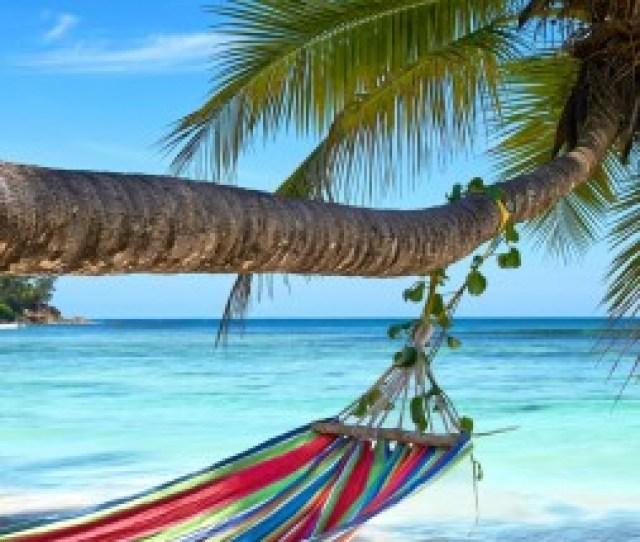 Beach Palm 4k Vertical
