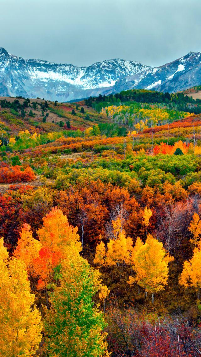 Wallpaper Autumn Forest Mountain 5k Nature 16242