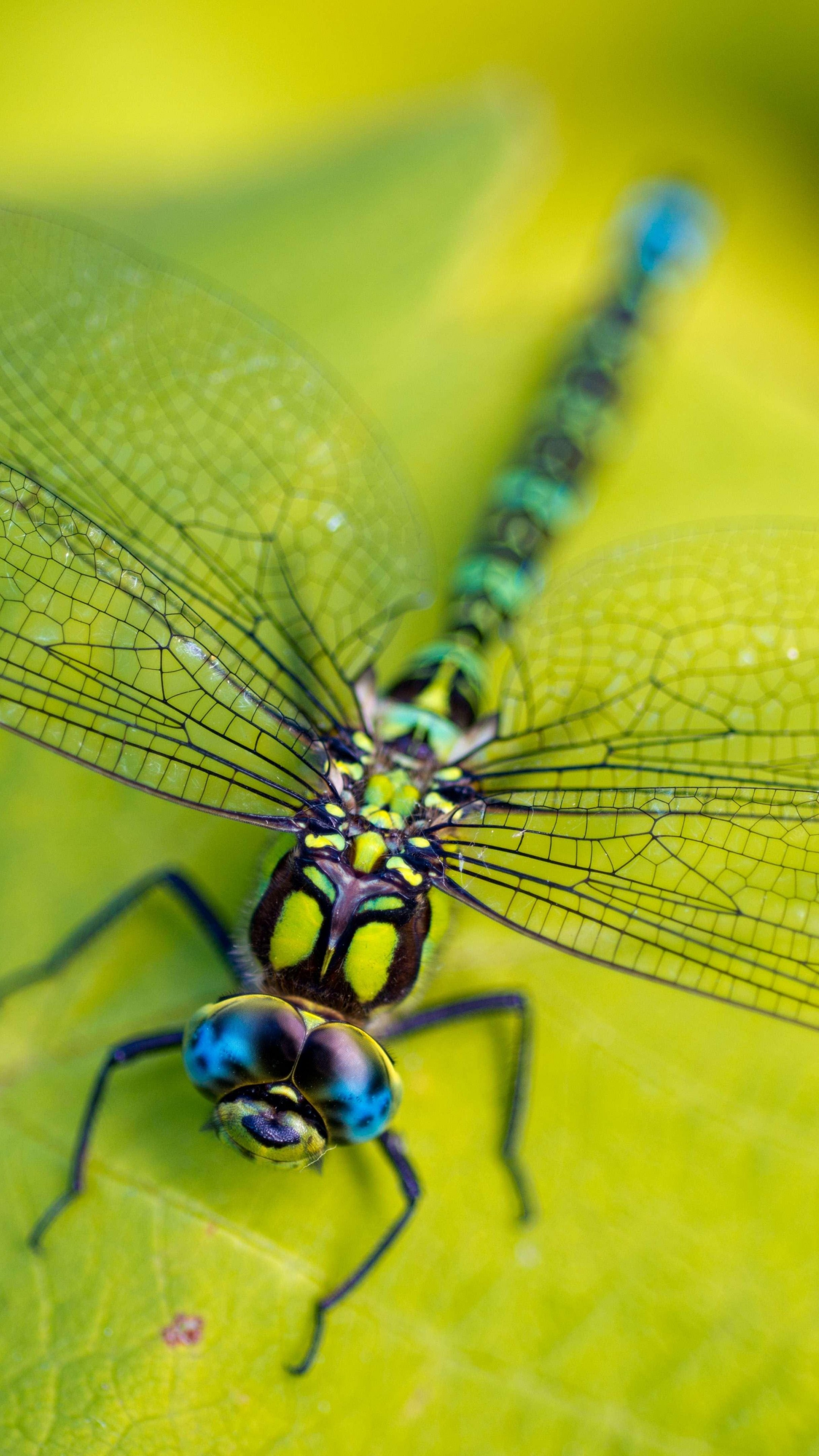 Wallpaper Dragonfly Leaves Wings Green Insect Macro