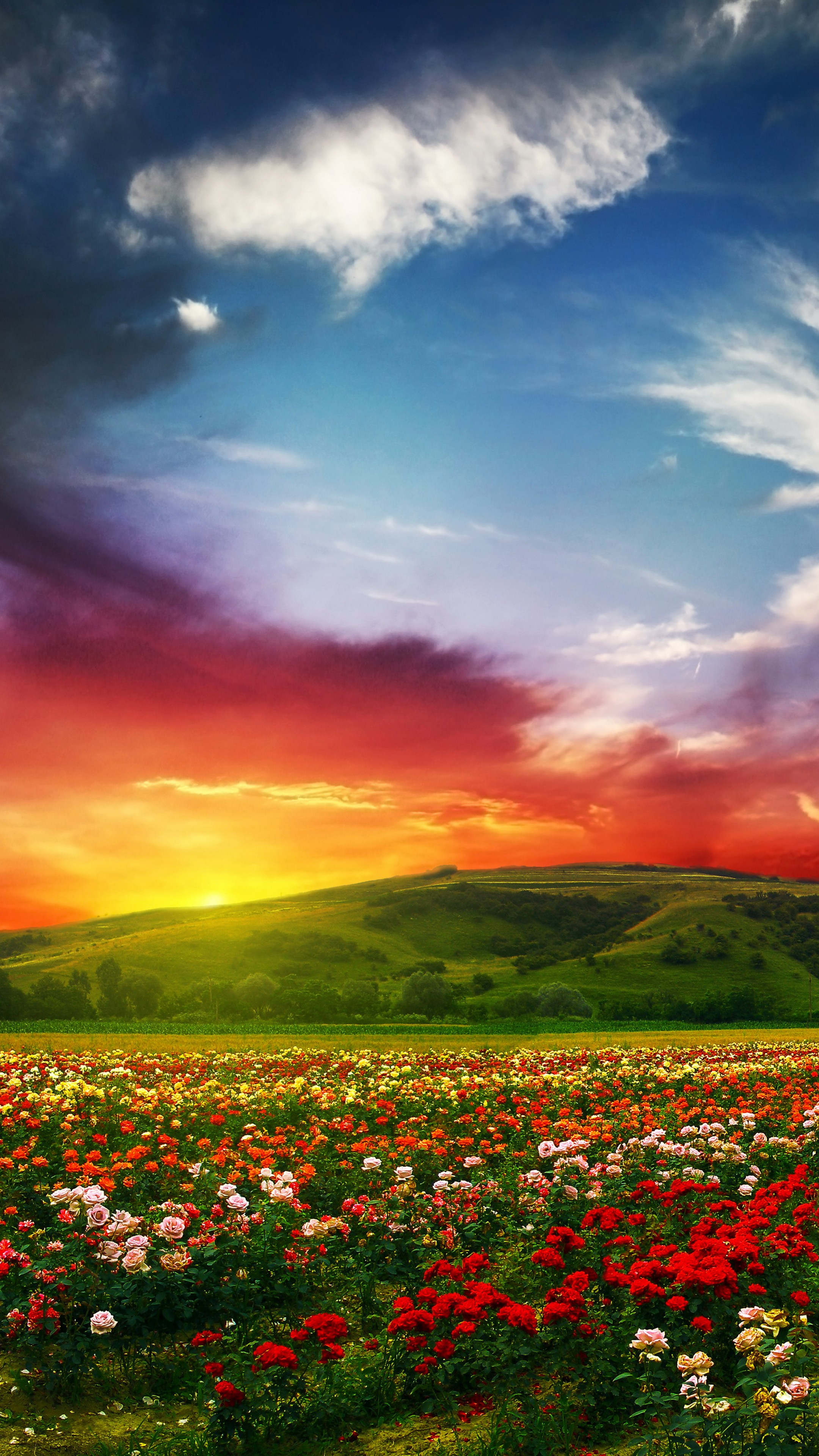 Wallpaper India 5k 4k Wallpaper Valley Of Flowers Meadows Roses Sunset Clouds Nature 5310