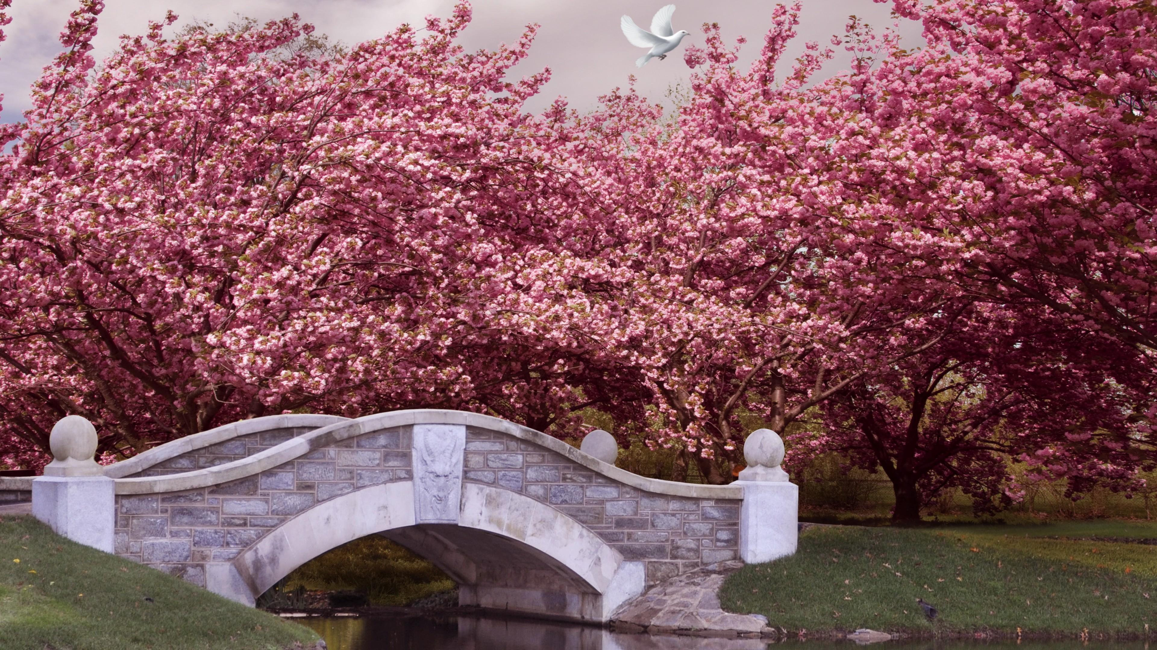 Wallpaper Japan 5k 4k Wallpaper Blossom Cherry Bridge