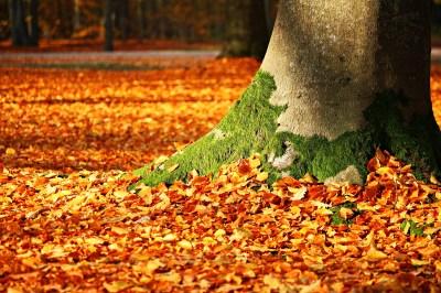 Wallpaper leaves, tree, autumn, 5k, Nature #15791