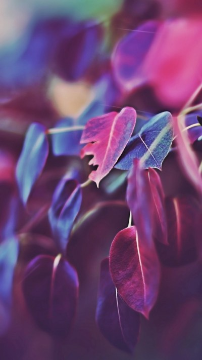 Wallpaper Leaves, 5k, 4k wallpaper, macro, purple, Nature ...