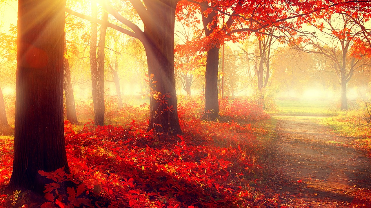 Wallpaper Park 5k 4k Wallpaper Autumn Beautiful