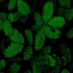Download 1920x1080 Wallpaper Foliage Green Leaves Plant Full Hd Hdtv Fhd 1080p 1920x1080 Hd Image Background 6536