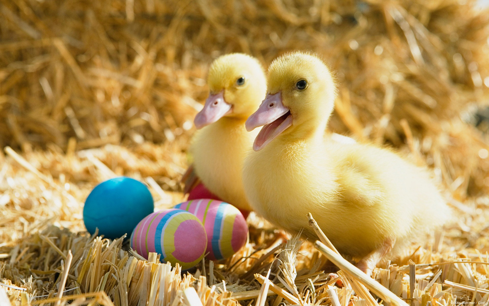 Ducklings And Easter Eggs Wallpapers Ducklings And