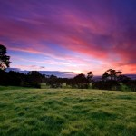 1280x720 Purple Sunset Over The City Cloud Meadow Tree World Vimeo Cover Image