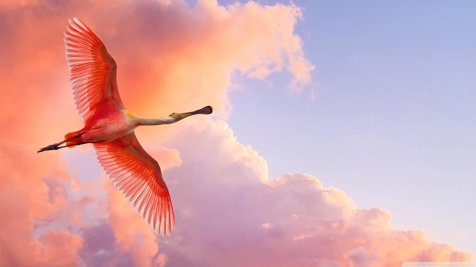 beautiful birds flying ❤ 4k hd desktop wallpaper for 4k ultra hd tv