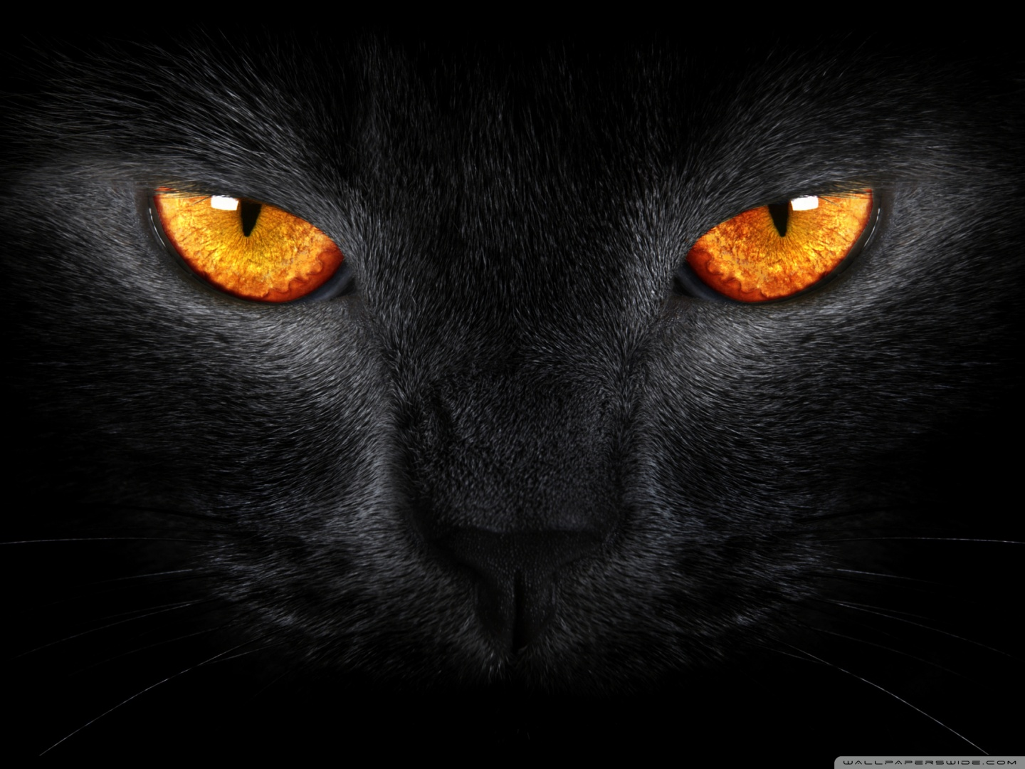 black cat ❤ uhd desktop wallpaper for ultra hd 4k 8k • mobile