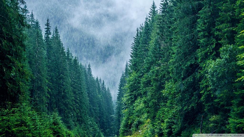 Carpathian Mountains Romania HD desktop wallpaper : High ...