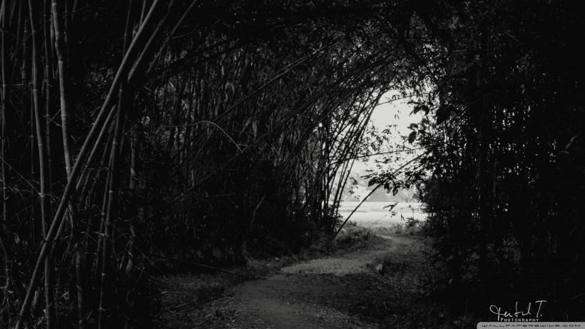Dark Forest Hd Desktop Wallpaper Widescreen High Definition