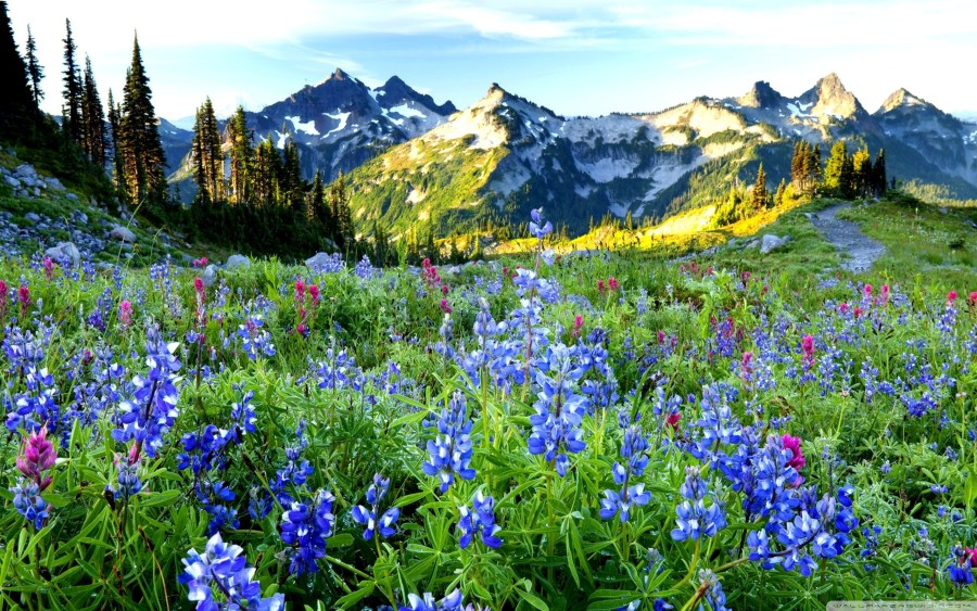 Mountains Flowers        4K HD Desktop Wallpaper for 4K Ultra HD TV     Wide