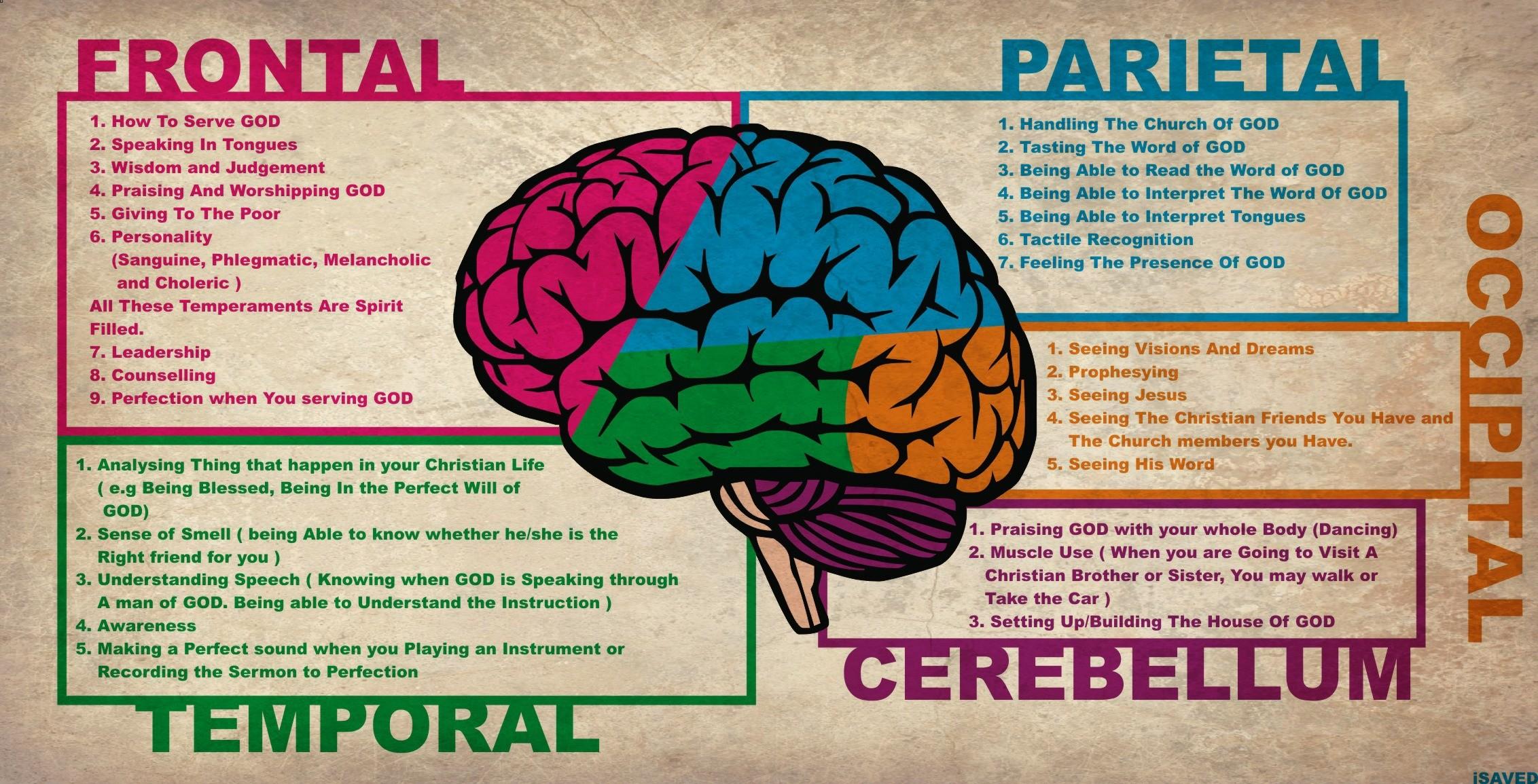 Brain Anatomy Wallpaper Wallpapertag
