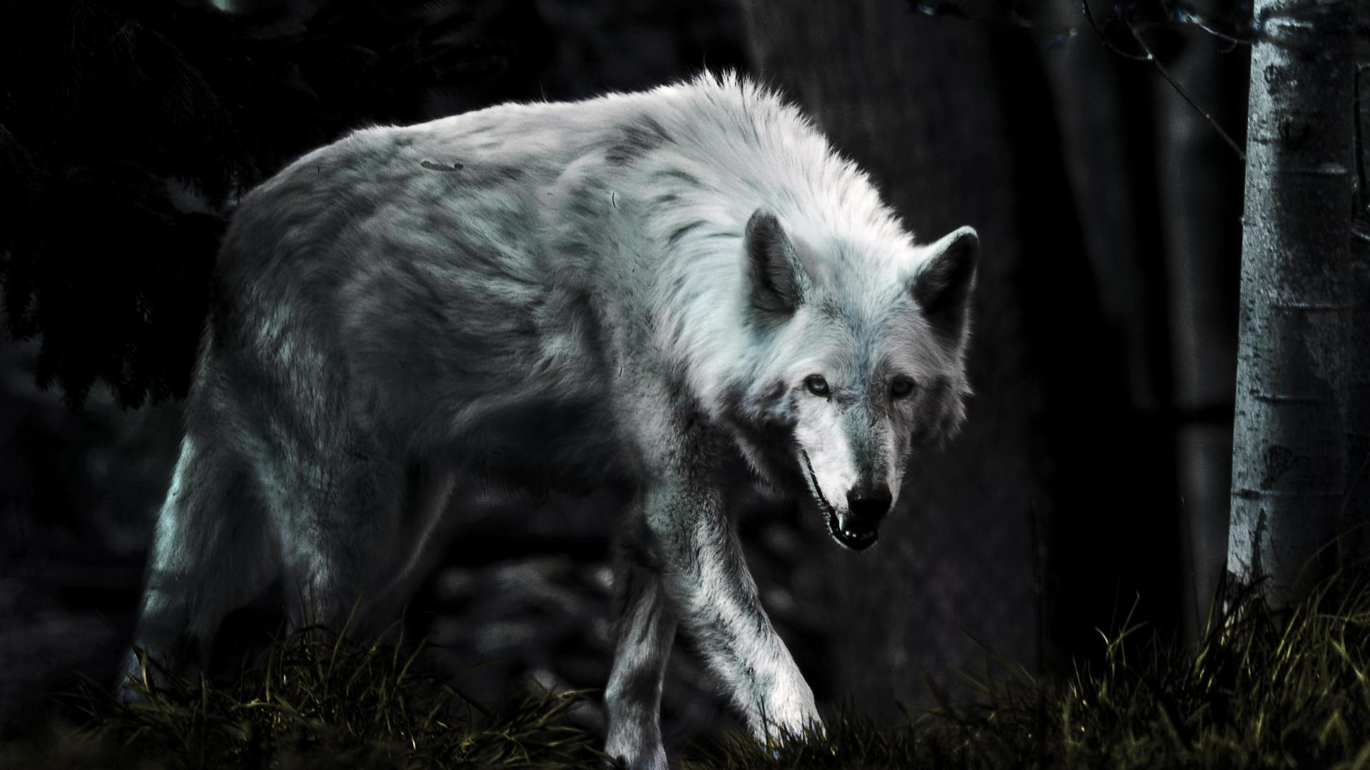 Full Moon Wolves Quotes