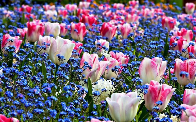 Wallpaper spring flowers free bedwalls spring flower wallpaper backgrounds mightylinksfo
