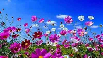 Spring Flowers Background Desktop ·① WallpaperTag